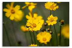 Yellow Flowers (Bear Dale) Tags: red yellow flowers im sure what these i think they just weeds nikon d850 nature fotoworx bear dale beardale lakeconjola shoalhaven southcoast framed fleurs flores photo photograph groups group flickr