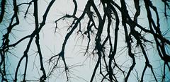 66920068 (AStomatin) Tags: russia saintpetersburg wood sky analog film vista agfa agat 18k