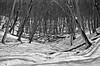 In the valley (lupuszka) Tags: woodland snow winter cold nature natural trees transylvania romania mures landscape blackandwhite bw light sunlight analog film neopan acros neopanacros fuji fujineopanacros