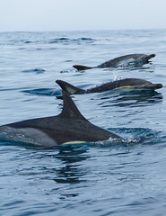 Find your freedom here! (riahostelalvor) Tags: dolphins amazing portugal algarve alvor nofilters ocean beauty