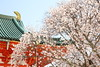 Welcome to Spring Kyoto (Teruhide Tomori) Tags: 京都 春 桜 日本 平安神宮 寺社建築 朱色 伝統 岡崎 sakura cherry kyoto japan japon heianjingushrine shrine spring flower architecture construction wooden
