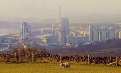 Cement Works (Marc Whitlock) Tags: derbyshire sheep cement works great rocks dale