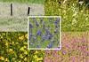 We just might be in peak wildflower season! (Ruby 2417) Tags: collage mosaic wildflower flowers color peak montage colors wild nature