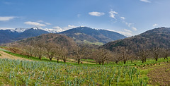 A field of leeks with Belledonne in the background (prakharamba) Tags: leek leeks poireaux montagne moutain belledonne mont cenis grand moulins field agriculture france alps grenoble snow ski nikon d750