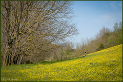 8 aprile 2018 (adrianaaprati) Tags: nature park green leaf flowers bloom blur april spring yellow landscape trees girl