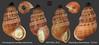 chondropoma vanattae polychroma republique dominicaine 13mm8 (MALACOLLECTION Landshells Freshwater Gastropods) Tags: annulariidae chondropomatinae chondropoma chondropomavanattaepolychroma watters2012 dominicanrepublic regionofpedernales lasmercedes caborojo claudeandamandineevanno gastéropodes gastropods invertebrates faune fauna macro gastropoda escargots terrestres collection schnecken mollusques molluscs mollusca coquillages landshells landschnecken landmollusken landsnails malacologie malacology macrophotography macrophotographie