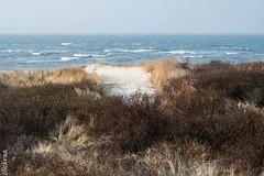 Langeoog im Frühling - Inselimpressionen-8501 (clickraa) Tags: langeoog insel impressionen
