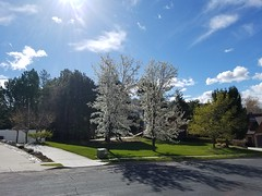Spring is here (denebola2025) Tags: ogden north utah spring weather change changing blossom blossoms tree cloud mountains mountain