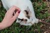 My Wife's Hand (Lon Winchester Photography) Tags: canoneos60d tamron90mmf28macro tamron90mm tamronmacro macro macrolens londrina zerão cat kitten gatinho gatinha littlecat pussycat