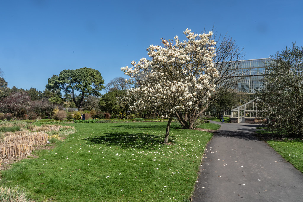 VISIT TO THE NATIONAL BOTANICAL GARDENS [GLASNEVIN DUBLIN]-138534