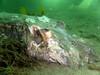 20180424-Clifton-154 (frannyfish) Tags: dead smooth ray finned clifton gardens sydney