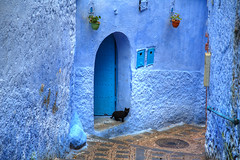Black Cat, Blue City (hapulcu) Tags: chaouen chefchaouen maghreb maroc marocco marokko marruecos morocco xauen hiver invierno شفشاون ⴰⵛⵛⴰⵡⵏ