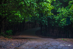 Paniyeli Poru Waterfalls (Monsoon Breakers) Tags: tourist place kerala waterfall waterfalls water paniyeliporu paniyeli poru perumbavoor forest rainforests jungle river trip tourisum tour touristplaceinkerala elephant birds viewpoint rain ernakulam