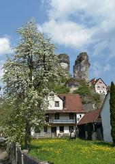 Tüchersfeld (Pixelkids) Tags: tüchersfeld fränkischeschweiz felsendorf birnbaum blütezeit baum haus fels museum fachwerk frühling bayern franken