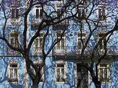 D. Carlos I (RobertLx) Tags: architecture city building house window tree branch blossom jacaranda lisbon portugal spring europe santos sãobento facade blue shadow