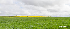 Planguenoual - Explore May 02, 2018 (Dicksy93) Tags: img33253327 panorama colza blé agriculture champ printemps spring fleur flower flore fiore flora nature arbre tree ciel sky nuage cloud paysage landscape landschaft landschap paisaje paesaggio seascape extérieur outdoor planguenoual côtes darmor 22 breizh bzh bretagne brittany france europe dicksy93 canon eos 7d efs1755mm f28 is usm explore 020518