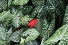 textures from nature (alestaleiro) Tags: leaf leaves hojas folhas plant nature natura naturaleza alestaleiro