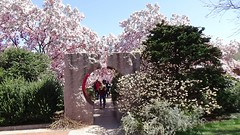 First Signs of Spring in D.C. - Magnolias, Kites and Crowds on the Mall, March 31, 2018 (lhboudreau) Tags: magnolias washington dc washingtondc flower flowers blossom blossoms magnolia magnoliatree magnoliatrees smithsonian museum smithsonianmuseum smithsonianinstitution garden gardens floweringtree floweringtrees enidahauptgarden 2018 tree trees sky people entrance districtofcolumbia