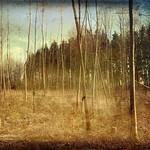 Waldperlachwald thumbnail
