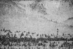 Corrélation organique (Mylene Gauthier) Tags: 2018 abstraction arbre espacesboisés lacchocorua mars montchocorua montagne montagnesblanches mylenegauthier newhampshire nikond7100 noiretblanc paysagedegrisaille printemps tamworth texture étatsunis