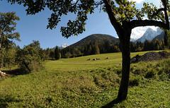 montagna autunno (valeriabuzzi) Tags: boschi prati