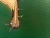 Chinese Fishingnet & Traditional Fishing (Gulfu) Tags: fishing fishingboat fishingnet kerala kochi kochigram ilovekochi lonelyplanetindia bbcearth keralatourism indiagram indiaclicks traveldiary travel travelmilitia dji drone dronephotography aerialphotography aerialview vypin