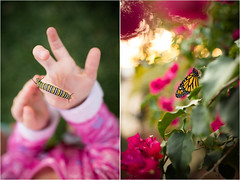 Birth (trois petits oiseaux) Tags: monarch butterfly caterpillar diptych kids nature