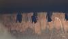 Bat (praveen.ap) Tags: bat ousteri osudu lake osudulake pondicherry