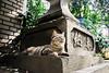 neko-neko2075 (kuro-gin) Tags: cat cats animal japan snap street straycat 猫 canon powershot pro1