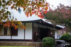 Tea House (DanaMichelle309) Tags: fallfoliage japan nagoya nagoyacastle teahouse travel nagoyashi aichiken jp