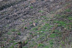 Rabbit 140418 - DSC_0299 (Leslie Platt) Tags: exposureadjusted straightened cropped cheshirewestchester redhillcottages rabbit