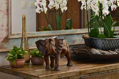 Elefante de madeira (Márcia Valle) Tags: decor stilllife naturezamorta casabonita orquídeas orchids decoração juizdefora