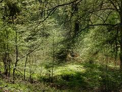 Fresh spring colours (sander_sloots) Tags: trees colours green spring koblenz forest bomen lentekleuren kleuren groen lente voorjaar