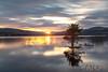 Sunset on the loch (Mark McKie) Tags: galloway gallowayforestpark gallowayhills gallowayhillloch clatteringshaws clatteringshawsloch clatteringshawsdam pinetree scotspine loch scotland scottishlowlands scottish scenery sunset sun nikon nikonphotography nikond7500