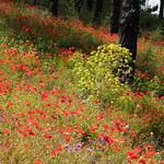 Primaveral thumbnail