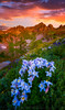 Clear Lake Summer (Darren White Photography) Tags: wildflowers sunrise mountains coloradolandscapes coloradosunrise columbine summerhiking lakes alpinelakes darrenwhite darrenwhitephotography fineartphotography fineartprints