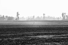 Life and fog (Shahrear94) Tags: landscape foggy tree flicker bnw monochromatic figure blackandwhite contrast bangladesh rural people sky cinema canon 70d shutter cinematic monochrome detail crop sand desert deserted longway cloud earth camera memoirs