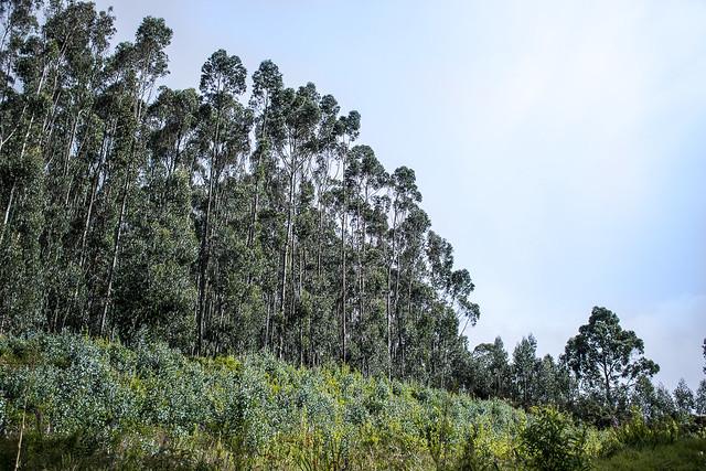 Bosques en los Cerros Orientales
