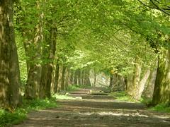 Green lane (sander_sloots) Tags: broekpolder vlaardingen lane trees forest bomen bos laan