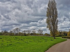 Lead the way!🌳😊🌳 (LeanneHall3 :-)) Tags: pathway green grass trees branches treetrunk grey white clouds talkativeclouds cloudsstormssunsetssunrises landscape samsung