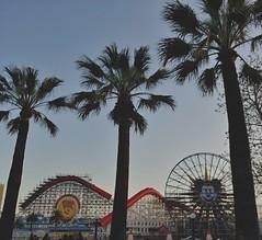 Trip-palms. (thnewblack) Tags: lg v30 android smartphone california californiaadventure disney outdoors palmtrees pixarpier 16mp f16 aicam snapseed