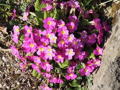 Botanischer Garten Wien (arjuna_zbycho) Tags: botanischergartenwien blume blumen nature makrofoto wiosna frühling spring flower flowers kwiat kwiaty