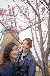 Portrait of young sisters under cherry blossoms