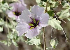 Le printemps (Missfujii) Tags: fleur nature printemps