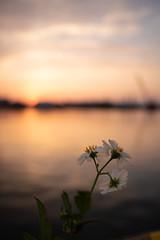 花 (fumi*23) Tags: ilce7rm3 sony 28mm ainikkor28mmf28s nikon nikkor macro plant flower harbor port sunset miyazaki water sea 花 港 海 宮崎 植物 ニコン bokeh