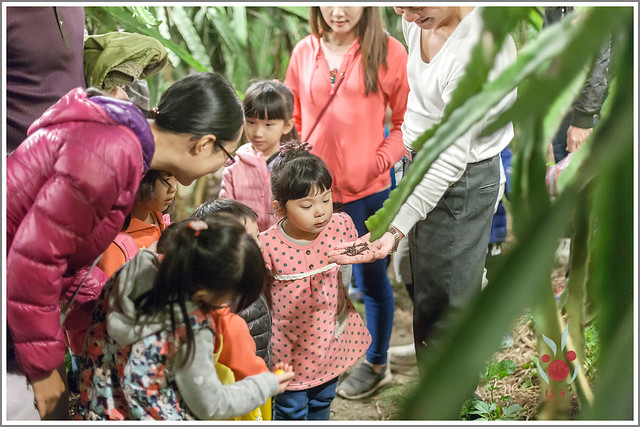 火龍果園星光野餐Ⅱ 找地瓜 烤地瓜 吃地瓜 (34)