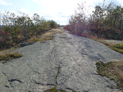Rocky Road in the Sun (geodeos) Tags: sheffieldconservationarea canadianshield sunlight trail granite rock stone forest tree grass lichen moss scenery landscape nature