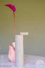 Un solo fiore... ed è felicità! (Gian Floridia) Tags: osho alone bianco calla ceramica design designweek felicità fiore flower giglio gioia lily single singolo solitario solo vase vaso violetto minimalismo