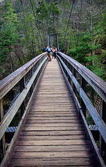 ACROSS THE BRIDGE (Wolf Creek Carl) Tags: bridge suspensionbridge outdoors georgia tallulahgorge trees nature statepark northgeorgia