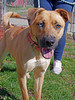 Lovey (3) (AbbyB.) Tags: dog canine rescue adopt animal shelter pet mtpleasantanimalshelter easthanovernj petphotography shelterpet
